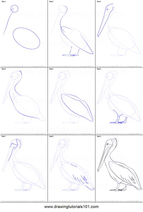 draw  brown pelican printable step  step drawing