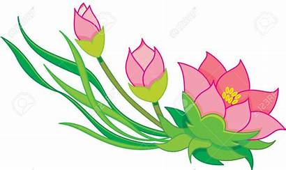 Lily Clipart Water Flower Clipground Flowers Lilies
