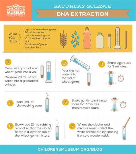 dna extraction lab report dna strawberry extraction lab report dna extraction from