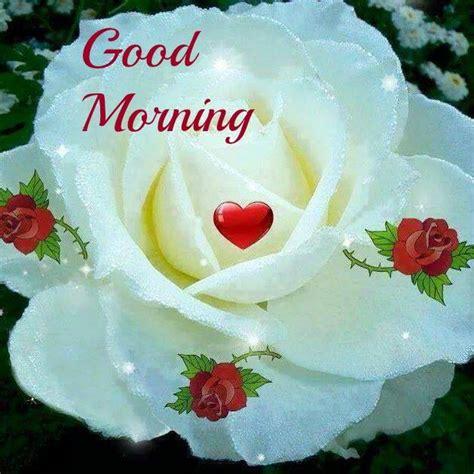 good morning rose flower  images mojly