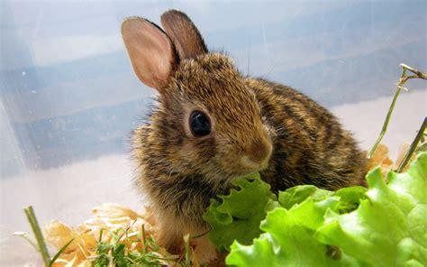 alimentazione dei conigli cura dei conigli i 10 errori pi 249 comuni animali pucciosi