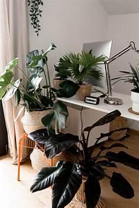 Palme Für Drinnen : mit gr nen zimmerpflanzen eine tolle oase schaffen der gro e gr npflanzen guide ~ Sanjose-hotels-ca.com Haus und Dekorationen