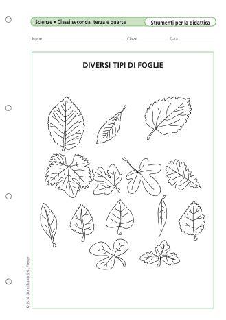 Diversi Tipi Di - tipi di foglia
