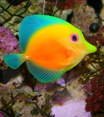 colorful saltwater fish best 20 colorful fish ideas on pretty fish