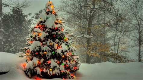 christmas trees hd wallpapers free download unique