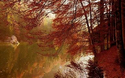 Autumn Abstract Foliage Landscape River Wallpapers Android