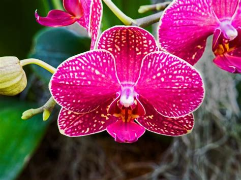 orchid  great diy network blog