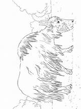 Yak sketch template