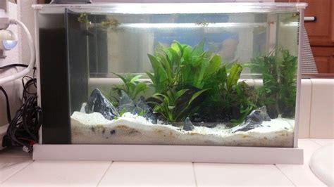 fluval spec v aquascape fluval spec v 5 5 gallon in white aquascapes betta