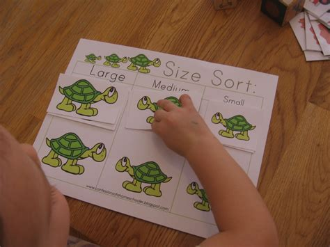 10 preschool math activities the letter t the measured 156 | turtle size sort 1024x768