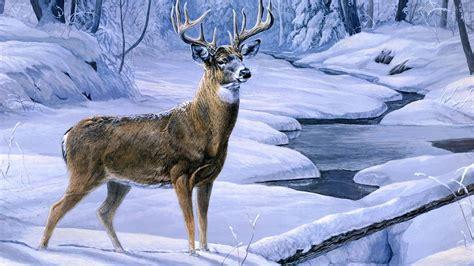 Deer Hunting Wallpapers Hd
