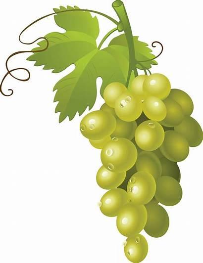 Grape Pngimg