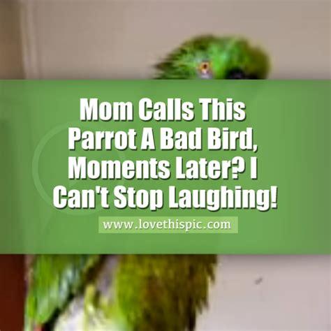 mom calls  parrot  bad bird moments