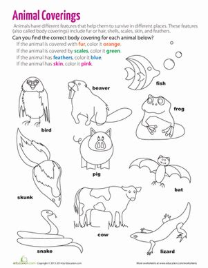 body coverings of animals worksheet education com