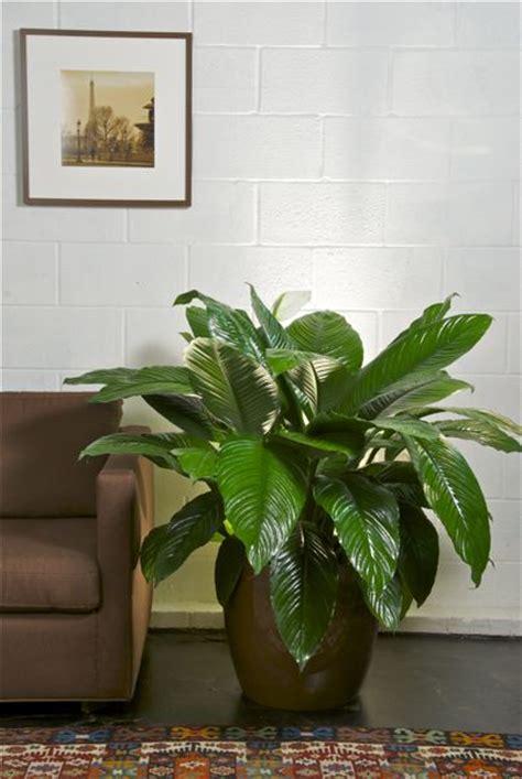 build closet plant  plans