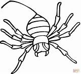 Spider Coloring Pages Widow Printable Drawing Clipart sketch template