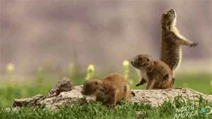Discovery Channel Lol GIF - Find & Share on GIPHY