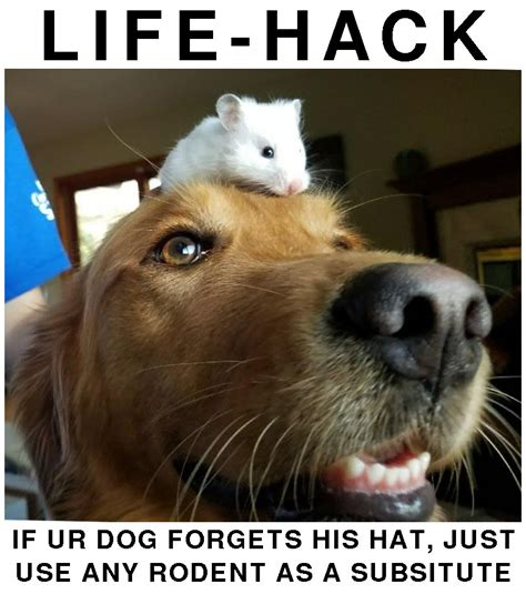 Pssst Hey You Want Memes Dog Hat Life Hack Just Use