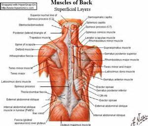 List Of Core Muscles Images