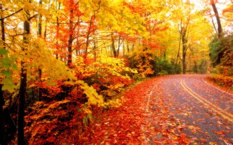 fall colors trees fall foliage wallpapers for desktop wallpaper cave
