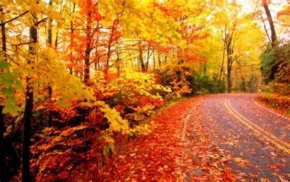 Fall Desktop Wallpapers Foliage Leaves Autumn