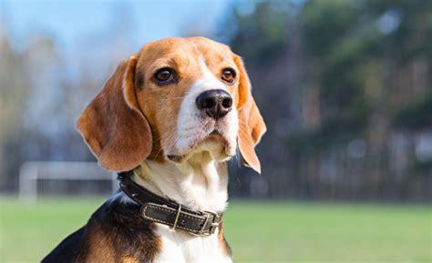 dog cat breed guides pet insurance tesco bank