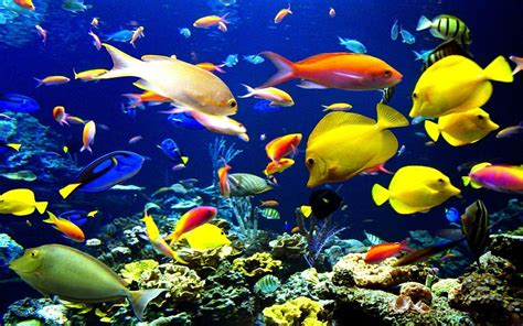 Fish Background Tropical Fish Backgrounds Wallpaper Cave