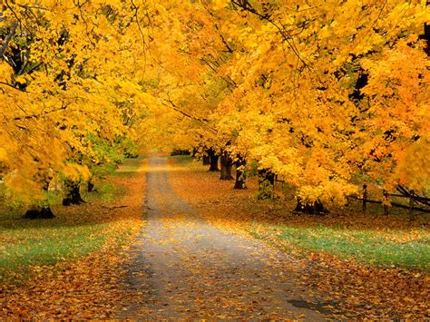 Autumn Roads Wallpapers by Autumn Road Wallpapers 2560x1920 2306353