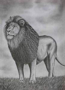 pencil sketch art designs PHotos : Drawing Pencil Sketches ...