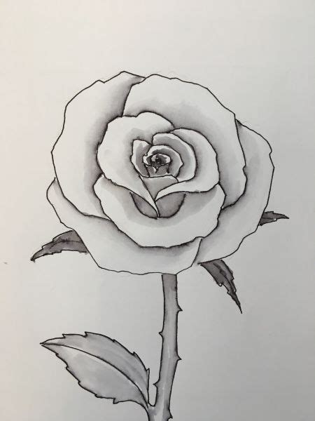 draw  rose easy  draw  drawings easy