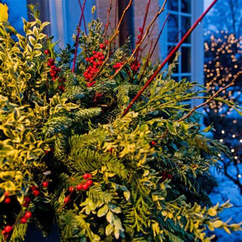 holiday outdoor decorating tips  mariani landscape