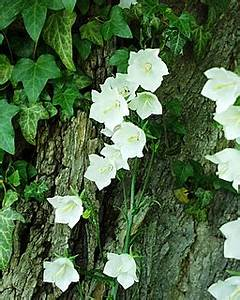 Japanischer Garten Augsburg : maine coon katzen ~ Eleganceandgraceweddings.com Haus und Dekorationen