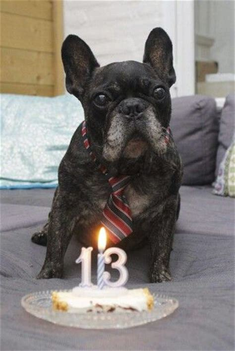 french bulldog owners   forget