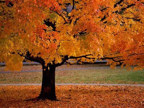 fall colors trees seastreak fall foliage cruise comfort inn middletown red bank a jersey shore hotel