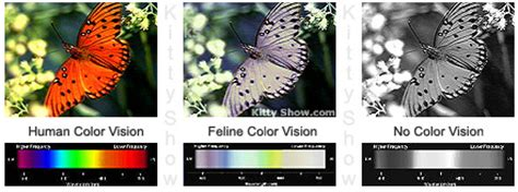 cat color vision cat color vision cat vision eyesight and how cats see
