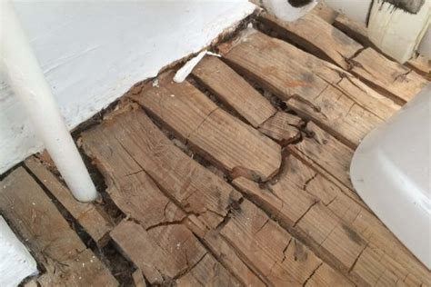 timber  damp gtt