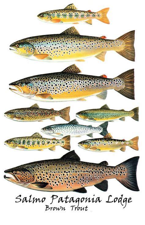 identifying  fish fishusa forums