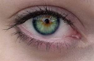 rarest eye color in humans | Did You Know: Less That 3% of ...