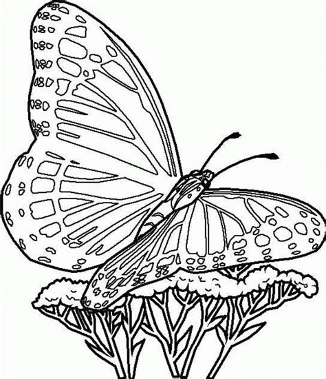 Butterflies are such cool members of the insect today, i have a fun and free butterfly coloring page printable. Free Printable Butterfly Coloring Pages For Kids