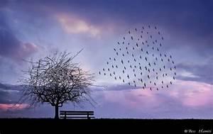 Inspirational Nature Photography by Bess Hamiti - Best ...
