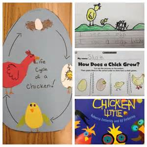 Chick to Chicken Life Cycle