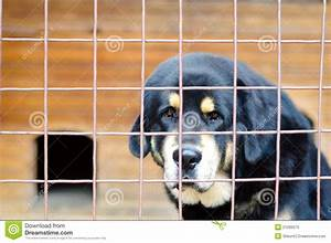 Sad Dog In Cage