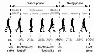 Common Temporal Divisions Of The Gait Cycle