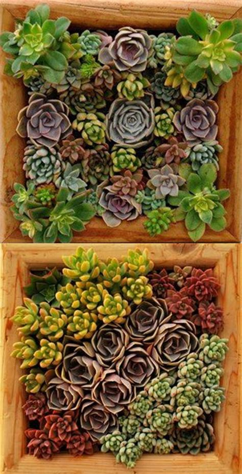 vertical succulent living wall   redwood frame