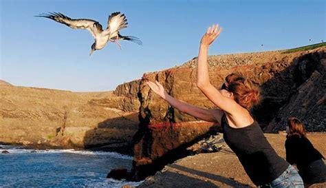 Uccello Simile Al Gabbiano - un uccello protetto in pericolo