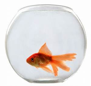 How to Take Care of a Goldfish Bowl - Basics for Begginers