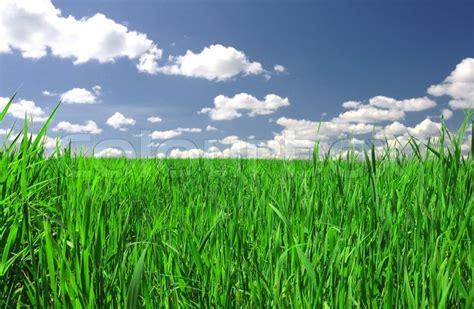 pin field grass tree transitions hd desktop