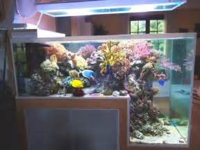 awesome aquariums    owned