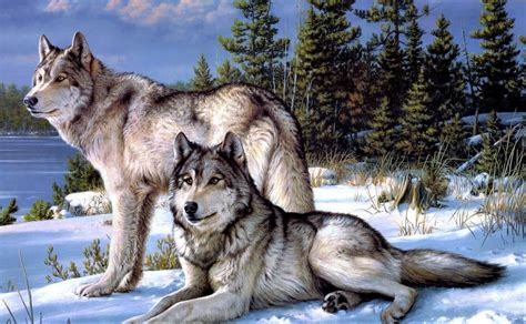 And Wolf Wallpaper Hd by White Wolf Hd Wallpaper Hd Wallpaper