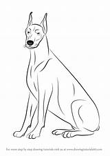 Doberman Draw Drawing Dogs Dog Drawings Step Learn Drawingtutorials101 Tutorials Steps Colouring Animals Pincher Animal sketch template